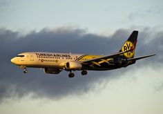Turkish Airlines Borussia Dortmund logojet as it arrives at Edinburgh yesterday in the setting sun. Turkish Airlines, Colour, Game, Flower, Beautiful, Borussia Dortmund, Projects, Venison, Color