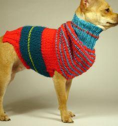 MAX REX  luxury brand la bamba dog sweater
