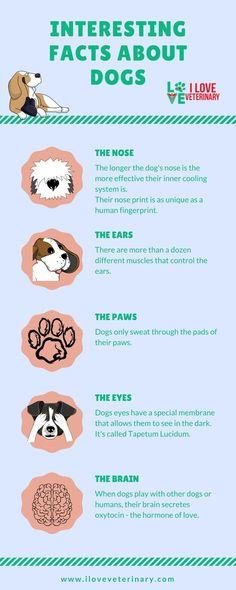 9 Pet Id Ideas Pet Id Pet Id Tags Reactive Dog
