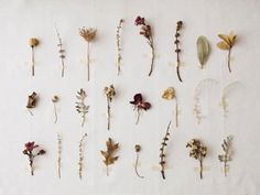 Dried flower table number idea.