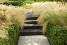 Verde Vista - Ten Eyck Landscape Architects, Inc. Garden Steps, Garden Paths, Garden Landscaping, Landscaping Ideas, House Landscape, Landscape Design, Back Gardens, Outdoor Gardens, Stipa