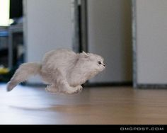 High Speed Cat, a funny photo of a cat running extremely fast speed and ignoring the gravity