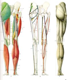 buttock and legs posterior