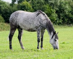 Own a horse...or two ;)  Always wanted a grey one with white spots on it's butt when I was younger :)
