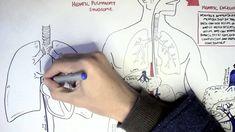 Liver Cirrhosis pathophysiology - Armando Hasudungan