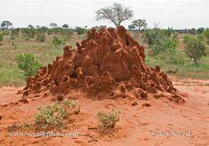 suelos sabana africana - Buscar con Google