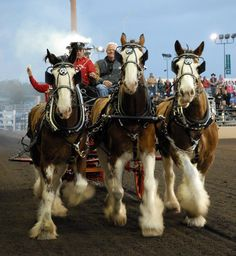 Del Mar's Night of the Horse . . . this is a ride that is unlike any other . . . .