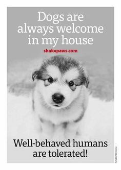 Dogs Are Always Welcome I Love Dogs, Puppy Love, Cute Dogs, Animals And Pets, Baby Animals, Cute Animals, Dog Quotes, Animal Quotes, My Animal
