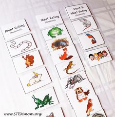 Sort into herbivore, carnivore, and omnivore: Free Food Chain Activity Cards from STEMmom.org