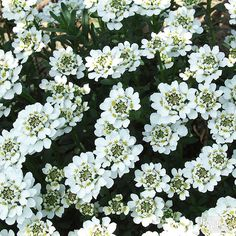 Disguise unsightly spots in your backyard with these plant ideas.