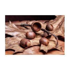 Oak Tree Macro Art Print by Tom Mc Nemar Oak Tree, Art Prints, Poster, Art Impressions, Billboard