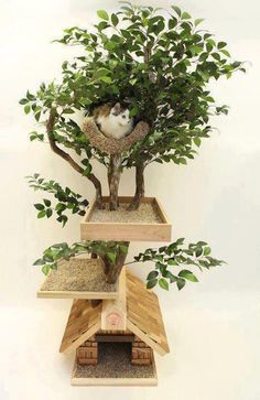ficus for cats