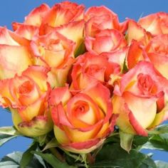 GlobalRose 200 Fresh Cut Yellow and Red Roses - Konfetti Roses - Fresh Flowers Wholesale Express Delivery Preschool Mothers Day Gifts, First Mothers Day Gifts, Homemade Mothers Day Gifts, Cheap Flowers, Fall Flowers, Fresh Flowers, Wedding Flowers, Yellow Roses, Red Roses