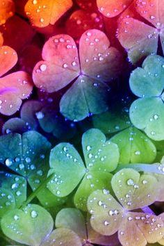 papel de parede do huawei trevos de arco-íris - - Galaxy Wallpaper, Colorful Wallpaper, Flower Wallpaper, Nature Wallpaper, Wallpaper Backgrounds, Iphone Wallpaper, Screen Wallpaper, Wallpaper Quotes, World Of Color