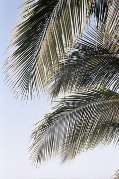 51 Ideas Palm Tree Wallpaper Paradise Life For 2019 Fond Design, Wallpapers En Hd, Summer Backgrounds, Palmiers, Beach Aesthetic, Tree Wallpaper, Foto Art, Tree Patterns, Tree Leaves