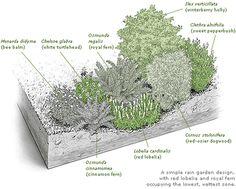Rain Garden Cross Section | Rain garden drawing — Catawba Riverkeeper Foundation