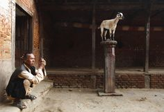 A man smokes a cigarette near a goat standing on a pole, at a temple at Khokana in Lalitpur, Nepal on October 9, 2012.  [Credit : Navesh Chitrakar / Reuters]