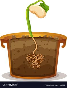 Seed germination in clay pot Royalty Free Vector Image