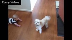 Babies And Dogs   Funny Videos new