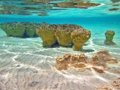 Shark Bay - Hamelin Pool & the Stromatolites, West Aust. Tasmania, Unusual Holidays, Parts Of The Earth, Exotic Places, Adventure Tours, Western Australia, Holiday Destinations, Great Places, Bolivia