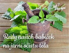 Holistic Practitioner, Get Healthy, Planter Pots, Herbs, Plants, Diet, Silky Hair, Long Curly Hair, Coarse Hair