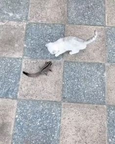Kitty and sugar glider playing. - Happy Happy Joy Joy - Kitty and sugar glider playing. Cute Little Animals, Cute Funny Animals, Funny Cute, Cute Cats, Funny Animal Memes, Funny Animal Pictures, Funny Memes, Pet Memes, Funny Videos