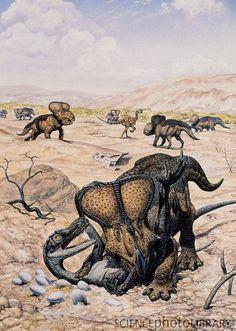 fuckyeahdinoart:  Velociraptor and Protoceratops by Mark Hallett