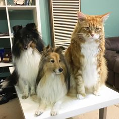 Meet the Instagram Sensation Omar, The World Longest Cat - Cats In Care