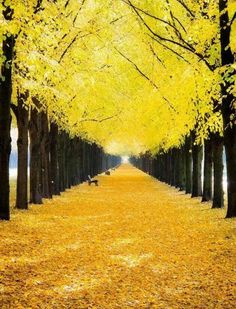 Yellow leaves. This is amazing