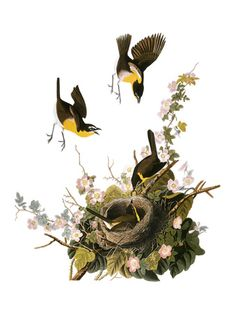 John James Audubon, Canvas Art and Posters at Art.com
