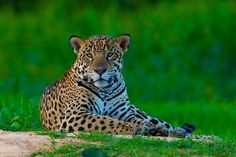 Pantanal - Mato Grosso - Brasil