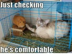 Oh!! Oh!! Oh!! Oh!! Just Checking He Is Comfortable  #Animals #Funny #Meme