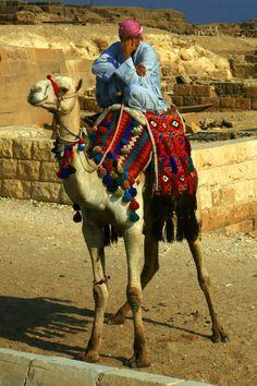 Camello en las en las pirámides