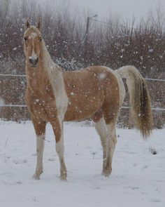 For my dear friend's grand-daughter Noelle! Paint horse in the snow