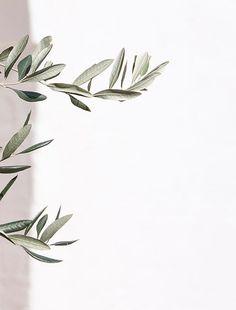 ideas for olive tree illustration design art prints Aesthetic Backgrounds, Aesthetic Iphone Wallpaper, Aesthetic Wallpapers, Tree Illustration, Foto Art, Trendy Tree, Olive Tree, Leaf Art, White Aesthetic
