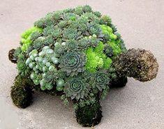 Potrebuje vaša záhradka či balkón trochu života? Doprajte jej exotický aranžmán v tvare korytnačky, ktorá si na chrbte nesie rôzne druhy sukulentov.