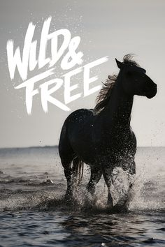 Wild and free #inspiration