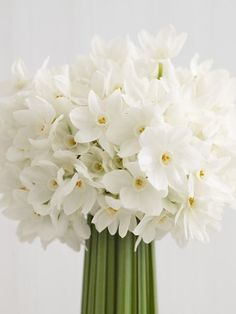May Wedding or June Wedding, vase of narcissus flowers for a wedding display table, white roses for the bridal bouquet, vase of White Dream tulips on a wedding display table as well Winter Wedding Flowers, Spring Flowers, Spring Bouquet, My Flower, Beautiful Flowers, Birth Flower, Simple Flowers, Bloom, Deco Floral