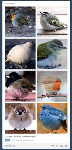"""""""I googled 'fat birdies' and found magic."""""""