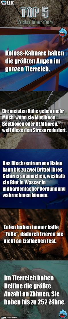 TOP5 Fakten über alles... - V219 Hai, Reduce Stress, Rezepte, Pictures
