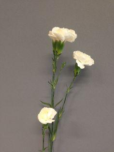 Hvit greinnellik Vase, Plants, Home Decor, Pictures, Homemade Home Decor, Flower Vases, Flora, Plant, Jars