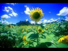 Summer - 久石譲(Joe Hisaishi) Such a beautiful song!