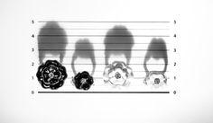 Camelia. Imágen de la nueva campaña de la colección de joyería Chanel.
