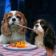 Cavalier King Charles Spaniel – Graceful and Affectionate King Charles Puppy, Cavalier King Charles Dog, King Charles Spaniel, Cavalier King Spaniel, Cockerspaniel, Spaniel Puppies, Cute Cats And Dogs, Lady And The Tramp, Dog Training