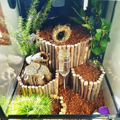 I've grown up enough to move away from fuzzy blankets and hot water bottles to a wonderful wild-like habitat just for me. Hamster Diy Cage, Gerbil Cages, Hamster Habitat, Hamster Life, Animal Room, Pet Mice, Pet Rats, Bartagamen Terrarium, Rats