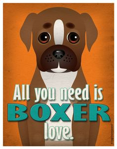 All you need is boxer love