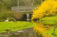 Leonard J Buck Garden  Somerset County Parks  11 Layton Road, Far Hills, NJ 07931