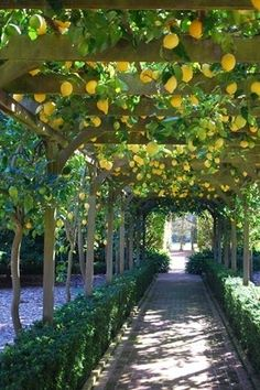 This tunnel trellis is the perfect way to grow fruit trees and provide shade and beauty.