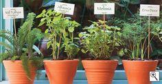 Como fazer uma horta de temperos | Decorando Casas Makeup Organization, Planter Pots, Home And Garden, Balcony, Amanda, Wordpress, Gardening, Blog, House
