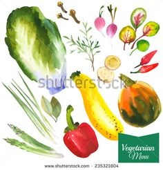 Watercolor vegetables and herbs. Provencal style. Recent watercolor paintings of organic food. Radishes, zucchini, pepper, bay leaves, ginger, green onion, asparagus, rosemary, cloves, pumpkin. - stock vector
